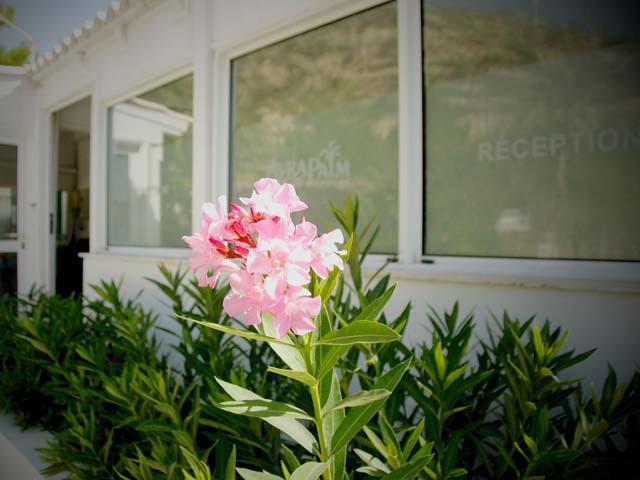 Avra Palm Hotel -
