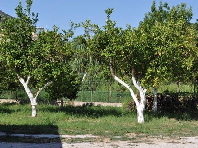 Sunny Garden -